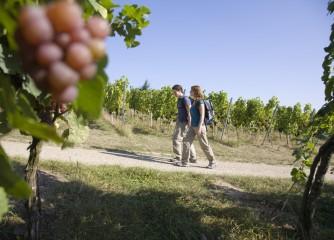 Pfälzer Weinsteig bei Schweigen-Rechtenbach