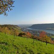 Bild Rhein-Westerwald