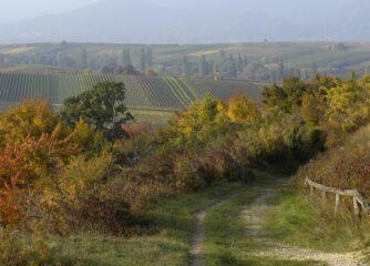 Hochsaison Herbst