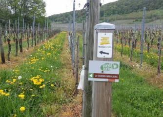 Erstes Wanderbloggertreffen in Rheinland-Pfalz – ein Rückblick