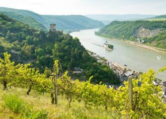 Kultur- und Weinbotschafter am Mittelrhein gesucht