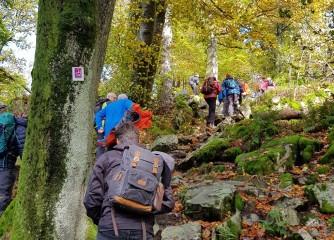Gelungenes Bloggerwandern im Nationalpark Hunsrück-Hochwald