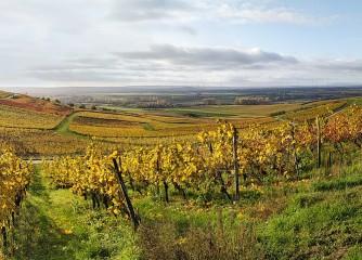 """Rheinhessens """"Schönste Weinsicht 2020"""" ist gefunden"""